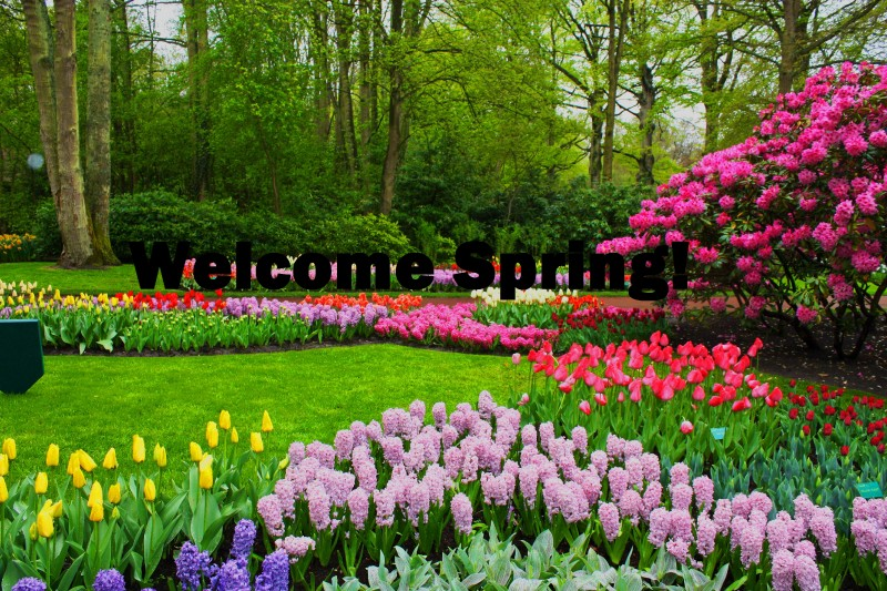 Welcome spring hd wallpaper image